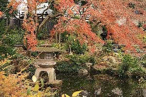 天沼弁天池公園は、秋模様ですね。